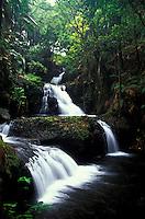 Onomea falls, Tropical botanical gardens, Hilo, Big Island
