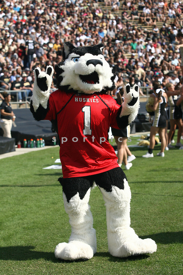 Northern Illinois Huskies Victor E. Huskie (mascot) during a game against the Purdue Boilermakers on September 28, 2013 at Ross-Ade Stadium in West Lafayette, IN. NIU beat Purdue 55-24.