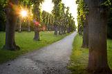 DENMARK, Copenhagen, Sunstar breaks through the trees in S¯ndermarken, Europe