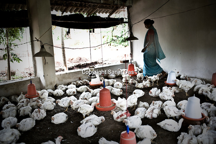 A woman is seen inside her poultry farm at the Sansilo rehabilitation colony, set up by the TATA Steel company for the displaced families in Kalinganagar, Orissa, India.