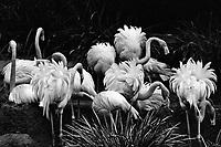 Flamingo-Film, San Diego Zoo