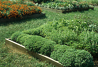 Basil plant types growing, including Spicy Globe in raised bed, with other raised beds of marigolds, flowers, herbs