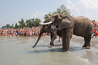 Elephant bath in Balaton