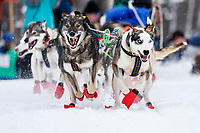 Alison Lifka's leaders bolt down the start chute during the restart of the 2019 Iditarod race in Willow, Alaska on Sunday March 3, 2019.<br /> <br /> Photo by Jeff Schultz/  (C) 2019  ALL RIGHTS RESERVED