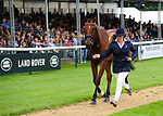 30th August 2017. Imogen Murray (GBR) riding Ivar Gooden during the First Horse Inspection of the 2017 Burghley Horse Trials, Stamford, United Kingdom. Jonathan Clarke/JPC Images