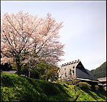 Cherry blossom and a Japanese traditional house in Ohara.