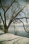 Snowy Coeur D Alene Lake tree.Film Scan