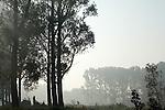 Europa, DEU, Deutschland, Nordrhein Westfalen, NRW, Rheinland, Niederrhein, Wachtendonk, Naturpark Schwalm-Nette, Flussaue ( Niers ), Morgenstimmung, Nebel bei Sonnenaufgang, Kategorien und Themen, Natur, Umwelt, Landschaft, Jahreszeiten, Stimmungen, Landschaftsfotografie, Landschaften, Landschaftsphoto, Landschaftsphotographie, Naturschutz, Naturschutzgebiete, Landschaftsschutz, Biotop, Biotope, Landschaftsschutzgebiete, Landschaftsschutzgebiet, Oekologie, Oekologisch, Typisch, Landschaftstypisch, Landschaftspflege....[Fuer die Nutzung gelten die jeweils gueltigen Allgemeinen Liefer-und Geschaeftsbedingungen. Nutzung nur gegen Verwendungsmeldung und Nachweis. Download der AGB unter http://www.image-box.com oder werden auf Anfrage zugesendet. Freigabe ist vorher erforderlich. Jede Nutzung des Fotos ist honorarpflichtig gemaess derzeit gueltiger MFM Liste - Kontakt, Uwe Schmid-Fotografie, Duisburg, Tel. (+49).2065.677997, archiv@image-box.com, www.image-box.com]