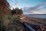Puget Sound beach, Squaxin Island, South Puget Sound, Olympia area, Washington State, Pacific Northwest, West Coast, USA.