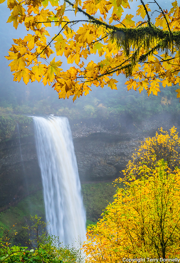 Silver Falls State Park, Oregon:<br /> South Falls on Silver Creek in fog surrounded by fall colors