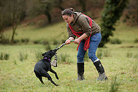 FAO JANET TOMLINSON, DAILY MAIL PICTURE DESK<br />Pictured: A dog is trained in tugging Wednesday 23 November 2016<br />Re: The Dog House in the village of Talog, Carmarthenshire, Wales, UK