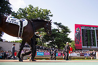 FUCHU,JAPAN-MAY 28: Rey de Oro,ridden by Christophe Lemaire, walks on the parade ring before the Japanese Derby at Tokyo Racecourse on May 28,2017 in Fuchu,Tokyo,Japan (Photo by Kaz Ishida/Eclipse Sportswire/Getty Images)