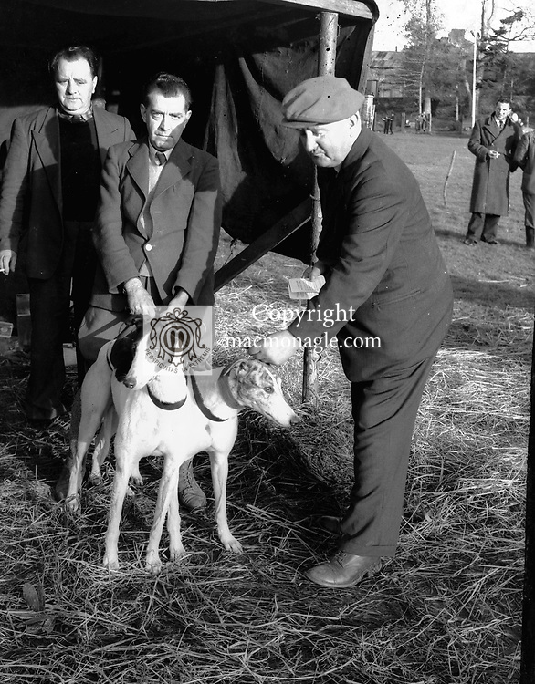 Coursing in the 1950's..Picture by Donal MacMonagle.macmonagle archive photo