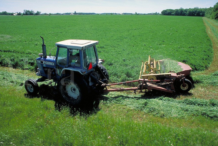 overview of tractor pulling alfalfa harvester through field of green alfalfa. Michigan.
