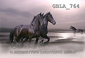 Bob, ANIMALS, collage, horses, photos(GBLA764,#A#) Pferde, caballos