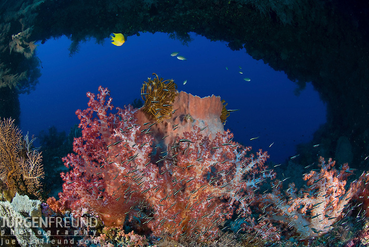 Soft corals and barrel sponge with a natural reef arch behind it