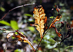 Patterns in foliage seen in the Esopus Bend Nature Preserve, in Saugerties, NY, on Thursday, September 7, 2017. Photo by Jim Peppler. Copyright/Jim Peppler-2017.