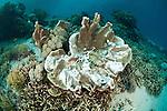 Bleaching hard coral.