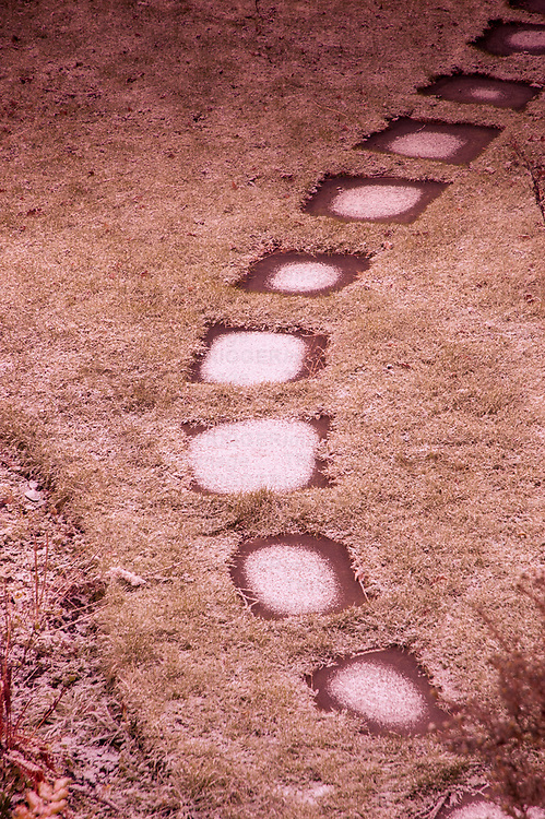 Stepping Stones on a garden path