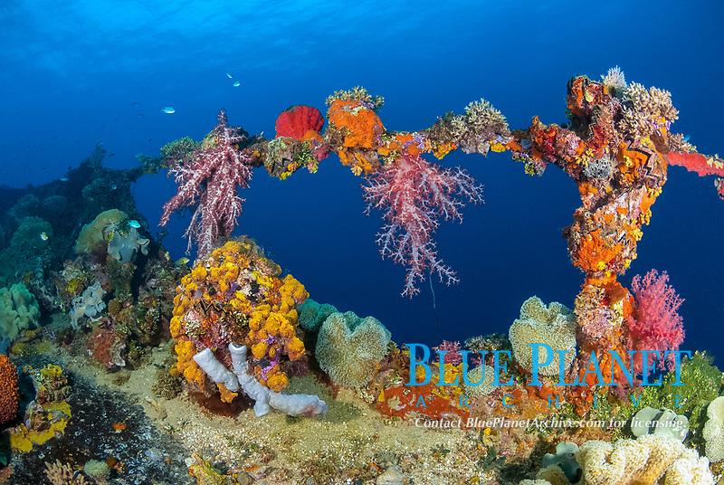 railing, encrusted, coral reef senic, Neon Damselfish, Pomacentrus coelestis, soft coral, Mushroom Coral, Leather Coral, Sarcophyton sp, Tree coral, Dendronephthya sp., Zigzag oyster, Cock's Comb Oyster, Lopha cristagalli, Tubastraea coccinea, Algea, sponges, Operation Hailstone, Wreck, WWII, Japanese shipwreck, Fujikawa Maru, Truk, Chuuk Lagoon, Micronesia, Pacific Ocean
