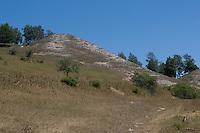 Trockenrasen, Trockenbiotop, südexponierte Kalkhänge im Kyffhäuser bei Steinthaleben, Thüringen, Deutschland