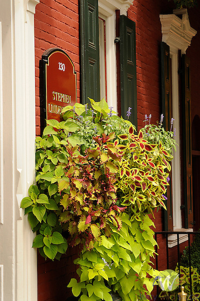 Planter with coleus and sweet potato vining plant.