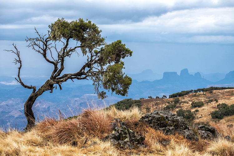 A lone tree forms the foreground for the incredibly vast landscape of the Simien mountains and high plateau.