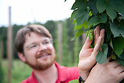 Scott King holds a hops cone at NCSU's Hops Field Monday July 9th 2012.
