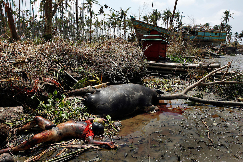 The body of a man lies next to the body of a baffalo on the banks of the Pyapon River (Irrawaddy Delta), Burma, Thursday, May 8, 2008. Cyclone Nargis struck the Irrawaddy Delta region of Burma on May 4th/5th, leaving a path of destruction in its wake and killing approximately 130,000 people.