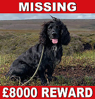 BNPS.co.uk (01202 558833)<br /> Pic: PhilGunning/BNPS<br /> <br /> Passionate plea: A heartbroken dog owner has offered an £8k reward for the return of his beloved pet. <br /> <br /> A distraught dog owner has put up a huge £8,000 reward in a last desperate bid to be reunited with his beloved missing pet.<br /> <br /> Mudd, a four and a half year old cocker spaniel, disappeared two months ago during a shoot at Stocks Reservoir in Slaidburn, Lancs.<br /> <br /> The working dog ran over a bank to retrieve a bird and has not been seen since.<br /> <br /> Owner Phil Gunning, 71, a retired police inspector, has gone to extraordinary lengths to find Mudd, carrying out a 'fingertip search' of the area. He has used hand-held thermal imagery equipment, which is typically for detecting foxes, and deployed drones to try to locate him.<br /> <br /> Search parties totalling 30 people have covered 5,000 acres of moorland, with daily searches for the first week he was missing. Since then, Mr Gunning and the local gamekeeper have carried on scouring the area regularly, but their efforts have so far drawn a blank.