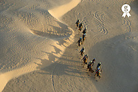 Tunisia, Douz, Sahara Desert, tourists on camel ride, aerial view (Licence this image exclusively with Getty: http://www.gettyimages.com/detail/sb10065474ck-001 )