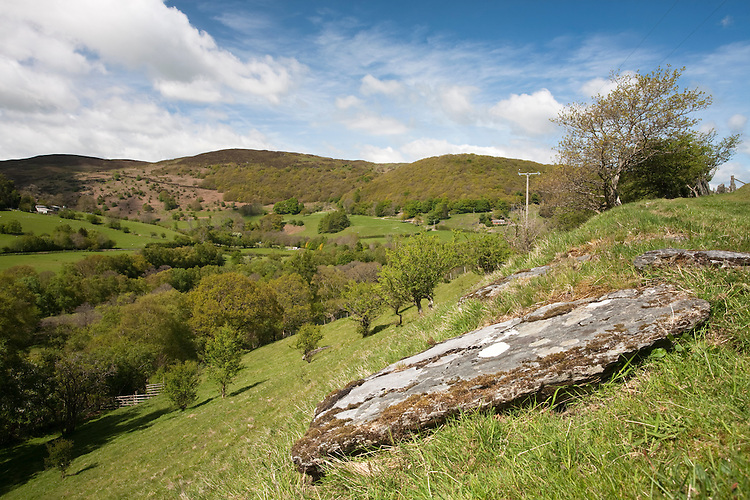 Hanging Sessile Oak Woodland at Gilfach Farm Nature Reserve, Rhayader, Radnorshire, Wales