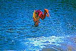 Salto no mar em Ubatuba, São Paulo. 1991. Foto de Juca Martins.