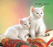 Marek, ANIMALS, REALISTISCHE TIERE, ANIMALES REALISTICOS, cats, photos+++++,PLMP2231,#a#