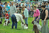 Judging dogs at a dog show, Chipping, Lancashire....Copyright..John Eveson, Dinkling Green Farm, Whitewell, Clitheroe, Lancashire. BB7 3BN.01995 61280. 07973 482705.j.r.eveson@btinternet.com.www.johneveson.com