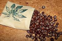 Kastanien werden in einen Kissenbezug gefüllt, bei Bedarf wird dieses Wärmekissen im Ofen erwärmt, Kissen massiert und wärmt, natürliche Wärmflasche, Gewöhnliche Rosskastanie, Roßkastanie, Ross-Kastanie, Roß-Kastanie, Kastanie, Aesculus hippocastanum, Horse Chestnut, Marronnier d´Inde