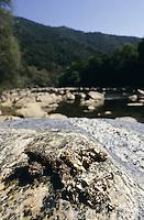 Europäischer Fischotter, Losung, Kot am Ufer eines Flusses, mit Nahrungsresten wie Schalenstückchen von verzehrten Muscheln und Krebsen, Lutra lutra, European river otter