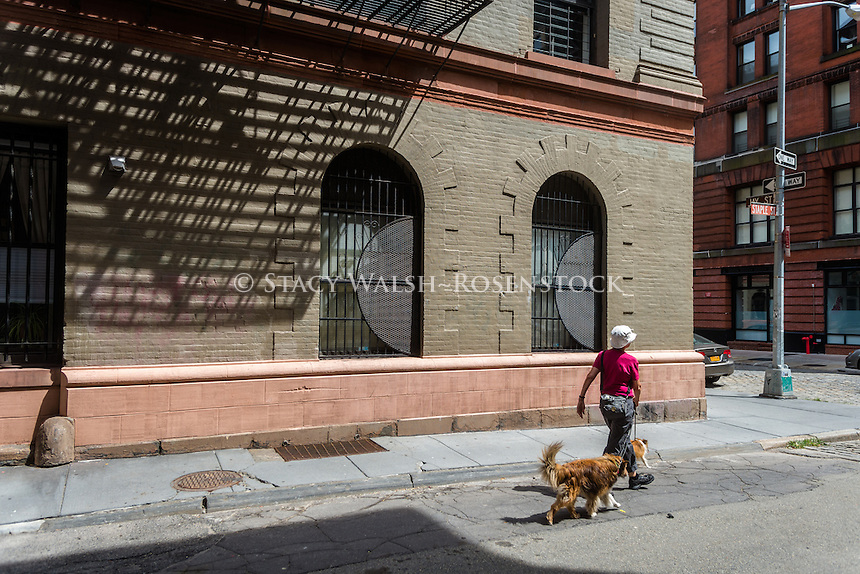 New York, NY 8 August 2015 - Woman walking her dogs on Staple Street in the TriBeCa neighborhood of Manhattan