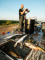 Josh Dunkle (cq) with team ETH Bow Fishing, from Texas, chooses his fish for weigh in after the U.S. Open Bowfishing Championship, Sunday, May 4, 2014. <br /> <br /> Photo by Matt Nager
