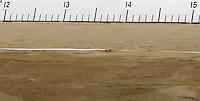 Die Sandgrube einer Weitsprunganlage mit Metermaß. Foto: Jan Kaefer / aif