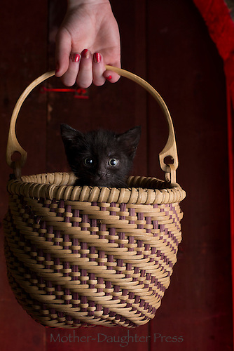 """Where am I going and why am I in this handbasket?"" Puzzled foster kitten, Yarmouth Maine, USA"