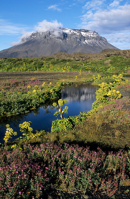 Stream flows from under lava in summer.Herdubreid is a Moberg mountain. Iceland