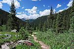 July 26, 2016 - Aspen, Colorado, U.S. -  Late July is the height of wildflower season along the Lost Man Trail in the Hunter-Fryingpan Wilderness Area near Aspen, Colorado.