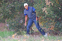 December 2, 2011: Tiger Woods hits out of the bushes off the 5th fairway during the second round of the Chevron World Challenge held at Sherwood Country Club, Thousand Oaks, CA.