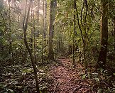 PERU, Amazon Rainforest, South America, Latin America, trees in Amazon rainforest