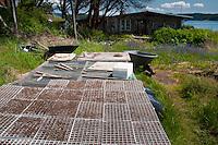 Seed Starts of Native Plants for Replanting Behind Caretaker's House, Yellow Island, San Juan Islands, Washington, US