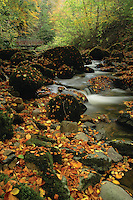 Autumn leaves and a waterfall at Kelburn Country Park, Fairlie, Ayrshire, Scotland<br /> <br /> Copyright www.scottishhorizons.co.uk/Keith Fergus 2011 All Rights Reserved