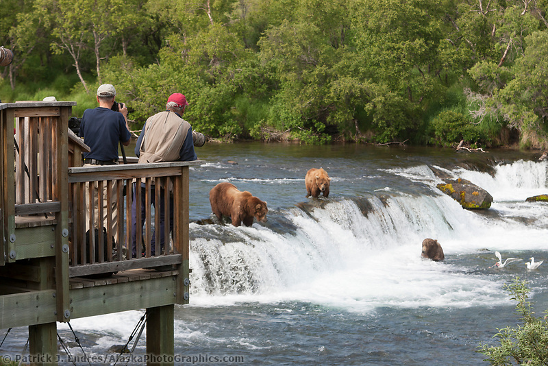 Photographers on the viewing platform take pictures of brown bears fishing for red salmon at the falls on the Brooks river, Katmai National Park, southwest, Alaska.
