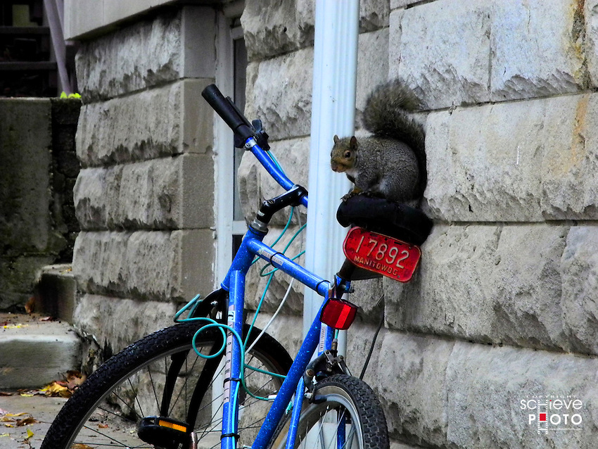 Squirrel on a bicycle seat.