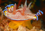 Nudibranchs, Sea Slugs, Flatworms